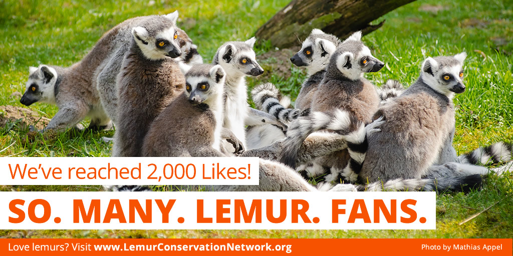 2000likes-lemurconservationnetwork